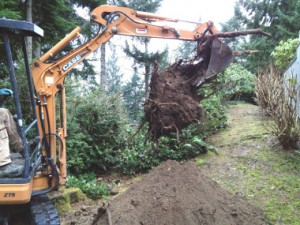 Stump Over Septic Tank Removal Gig Harbour