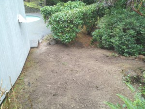 Stump Removal After